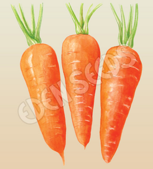 Carrot, Chantenay Red Cored ~ Select Organics Seed Packet