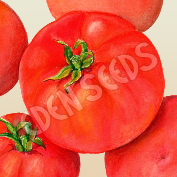 Tomato, Beefsteak ~ Select Organics Seed Packet