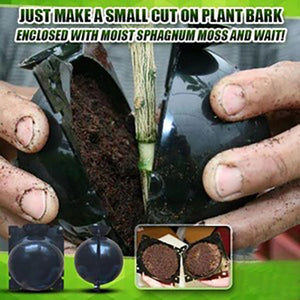 Plant Root Growing Box