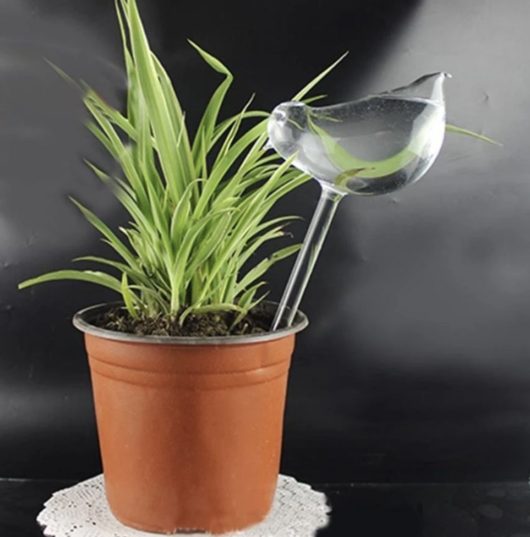 Plant Self-Watering Glass Bulbs