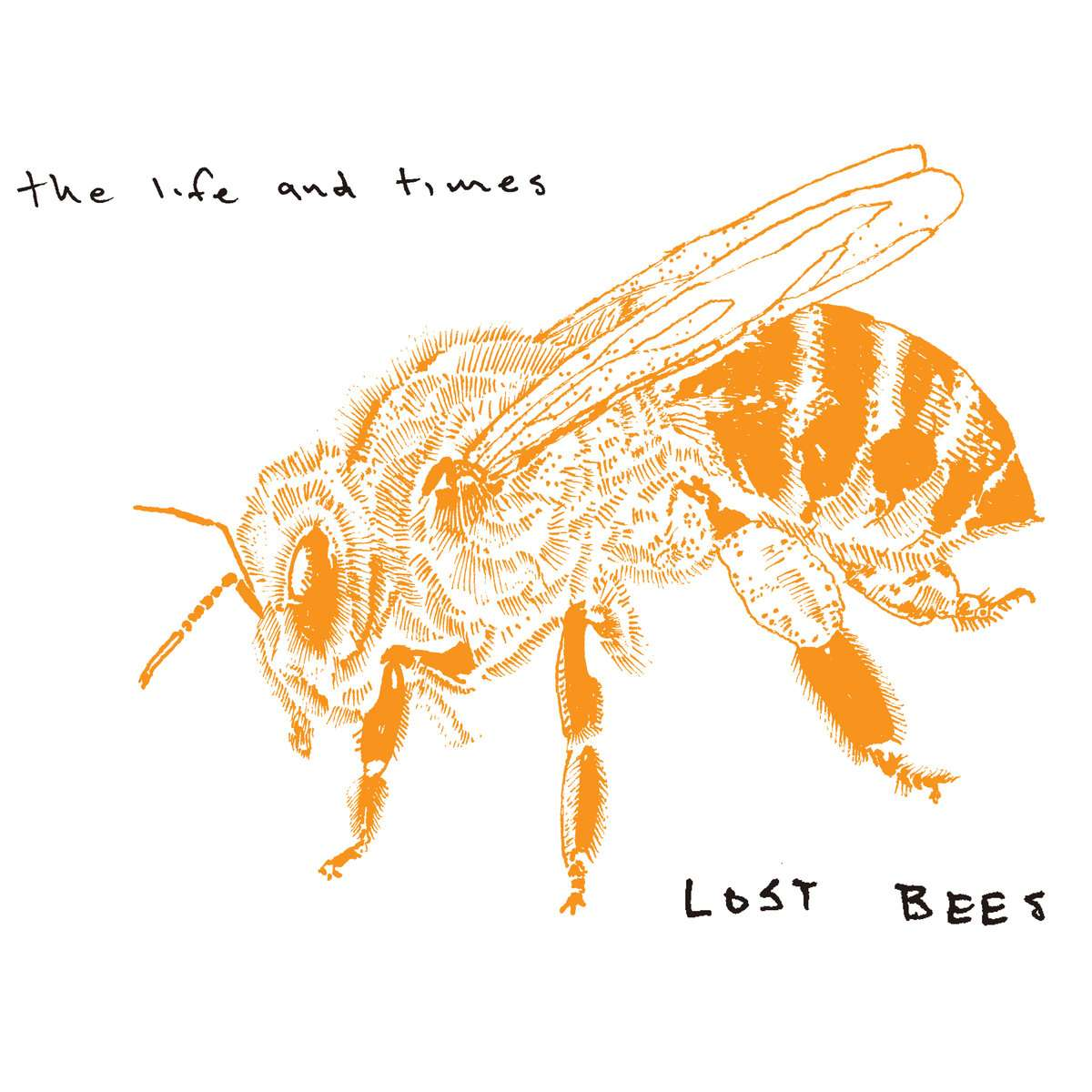 The Life and Times | Lost Bees