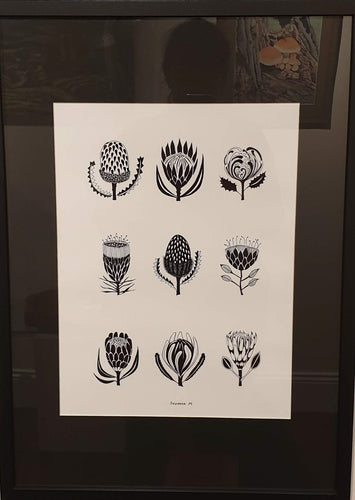 A2 Black Framed Print - Proteas by Suzanna Mysiszczew - Atelier Crafers