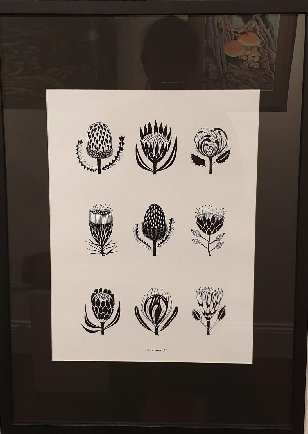 A2 Black Framed Print - Proteas by Suzanna Mysiszczew-Homewares-Atelier Crafers