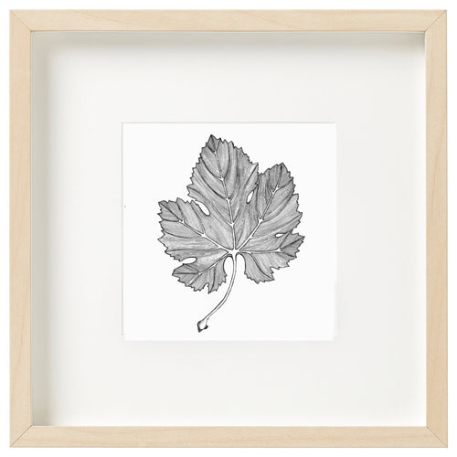 Vine Leaf - Framed mini print by Jessica Patrick-Homewares-Atelier Crafers