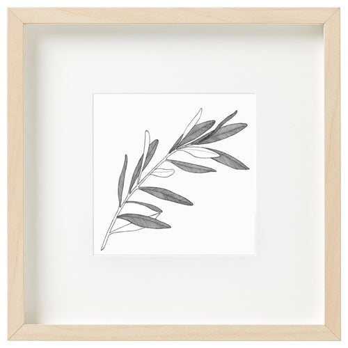 Olive Leaf - Framed mini print by Jessica Patrick - Atelier Crafers