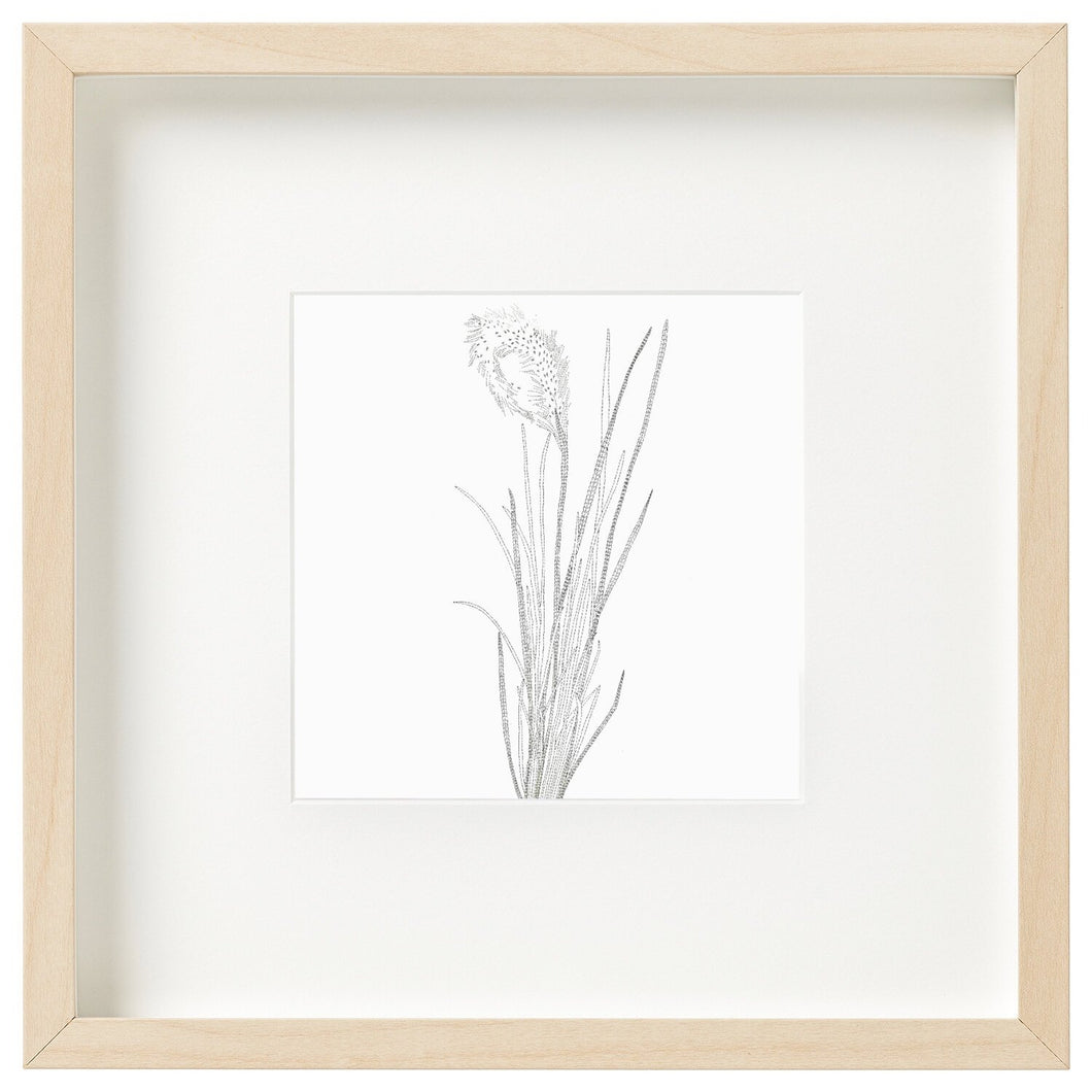 Bloodgrass - unframed mini print-Homewares-Atelier Crafers