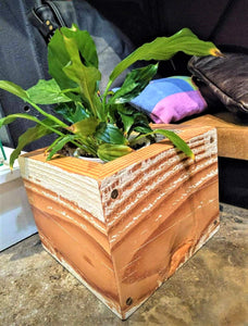 Peace Lily plant in reclaimed wooden box