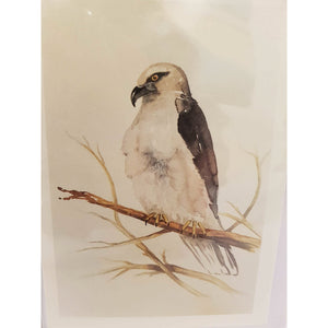 Greeting Card - Black Shouldered Kite - Paula Schetters-Stationery-Atelier Crafers