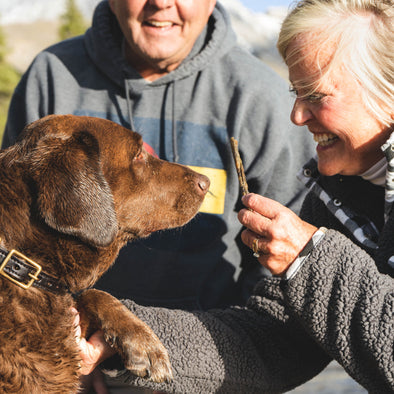 10 Benefits of Emotional Support Animals for Seniors