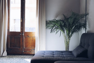 Add indoor plants to your home to lift your spirits and lower winter blues