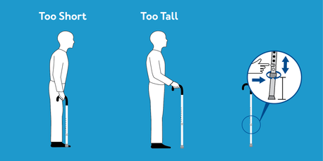 Cane Height