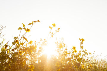 How much sunlight is too much?