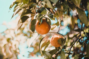 What if you can't get sunlight: Vitamin-rich foods