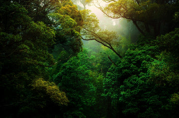 Spending time in nature can boost serotonin production