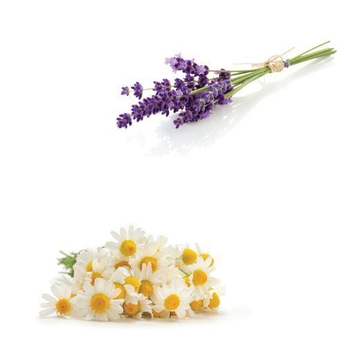 Lavender and Chamomile for pain relief and relaxation