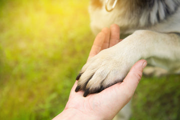 Support animals help with stress and anxiety in elderly persons