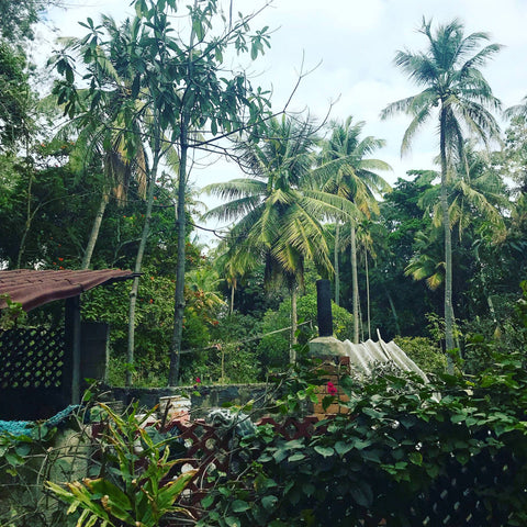 A photo of trees and dense foliage in an Indian village taken on one of our founder's trips to visit the artisans who make our ethical, sustainable clothing.