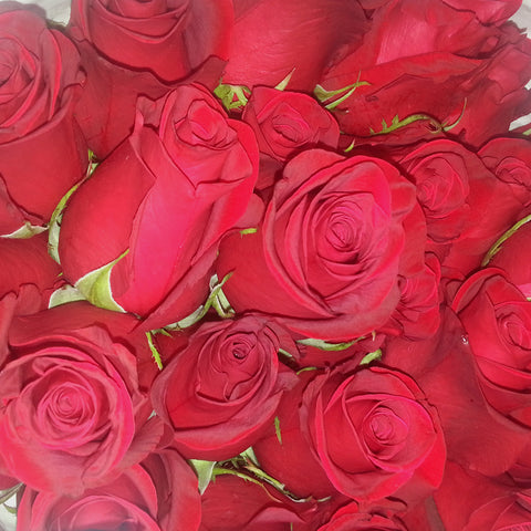 Wholesale Fresh Freedom Red Bulk Roses