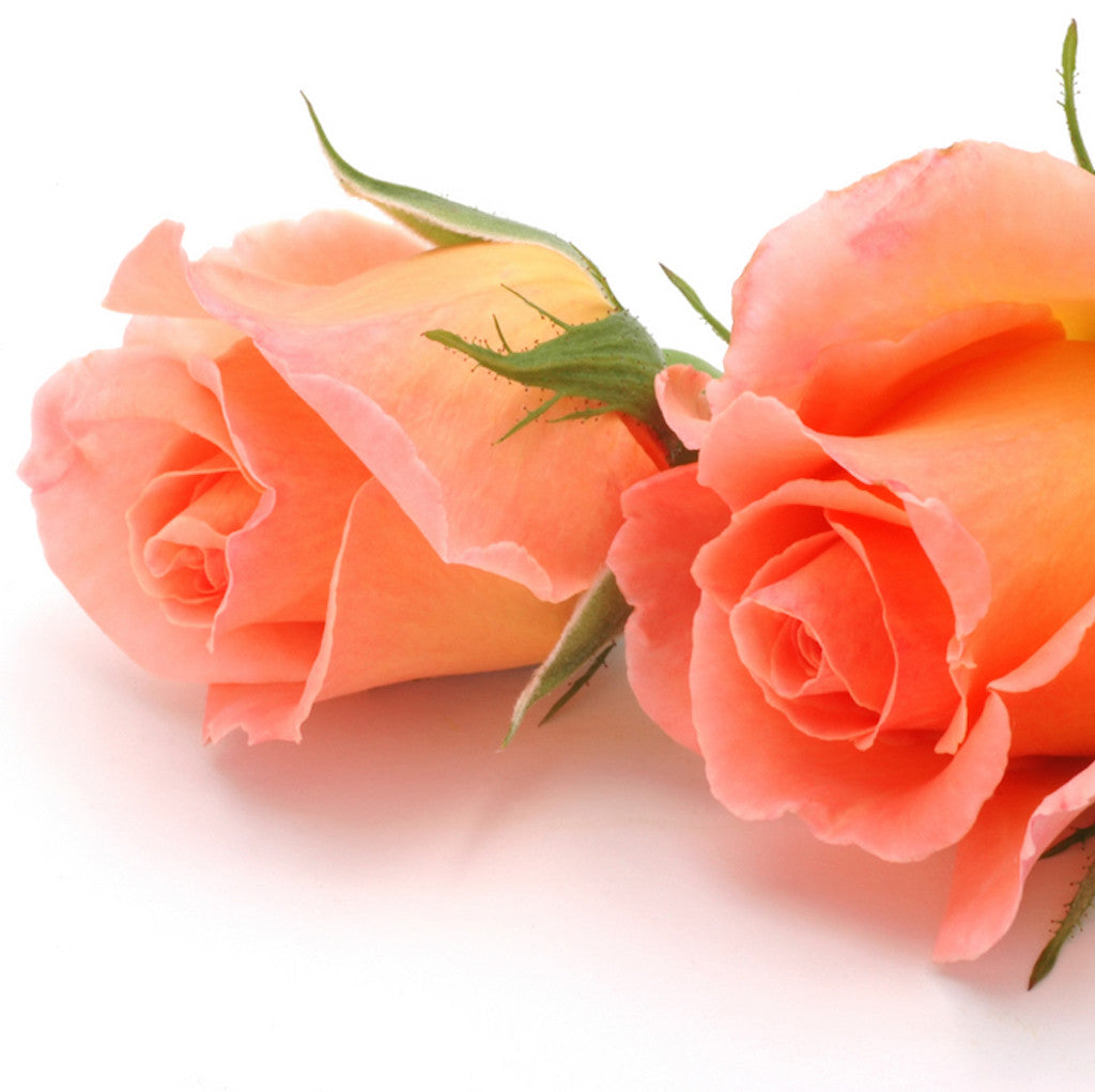 Wholesale Fresh Salmon Pink Bulk Roses