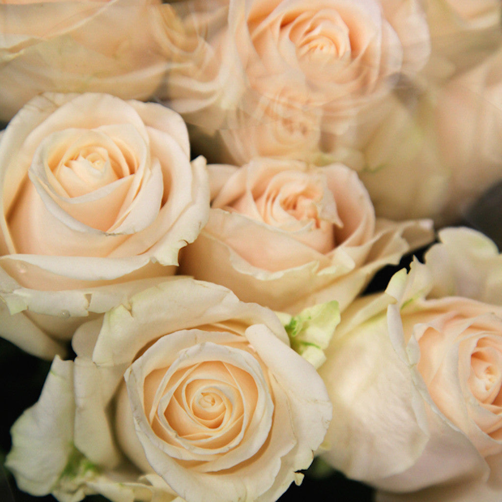 Fresh Bulk Ivory Vendela Cream Rose Stems ($.68 to $1.00 ...