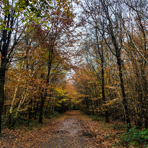 Autumnal walks in the West Kent countryside