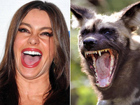 TRY NOT TO GASP AT THESE PICS OF ANIMALS THAT LOOK LIKE CELEBS