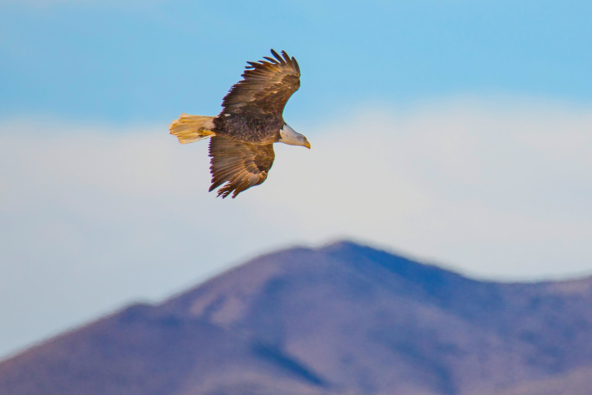 My Visit to Bosque Del Apache National Wildlife Refuge