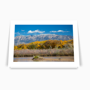 Enchanting Views Printed Card Collection