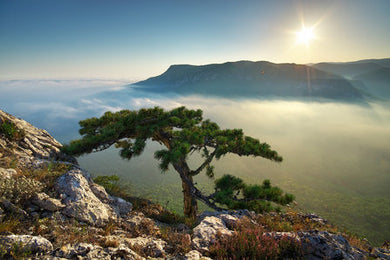 Poly Canvas Print - XXL - A Lone Tree on a Mountain