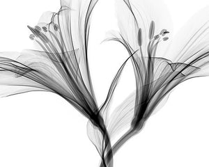 Poly Canvas Print - XXL - Abstract - X-ray of Flower Petals