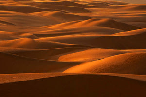 Poly Canvas Print - XXL - Photography - Sand Dunes on a Late Afternoon