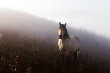 Load image into Gallery viewer, Poly Canvas Print - Float Frame - Photography - Horse in a Foggy Mountain Valley