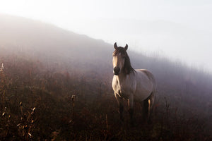 Poly Canvas Print - XXL - Photography - Horse in a Foggy Mountain Valley