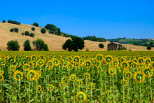 Load image into Gallery viewer, Poly Canvas Print - Photography - Landscape View of the Marches Region in Italy Near Montecassia