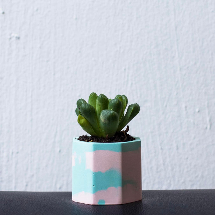 Create a Mini Marble Planter on 21 Dec 2019 / 1100 - 1230