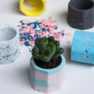 Create a Mini Marble Planter on 1 Dec 2019 / 1100 - 1230