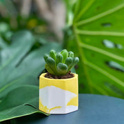Create a Mini Marble Planter on 30 Nov 2019 / 1100 - 1230