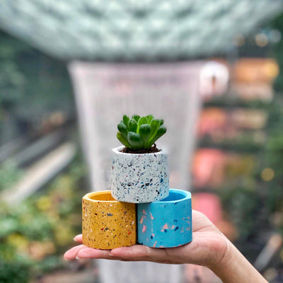 Create a Mini Terrazzo Planter on 15 Dec 2019 / 1100 - 1230