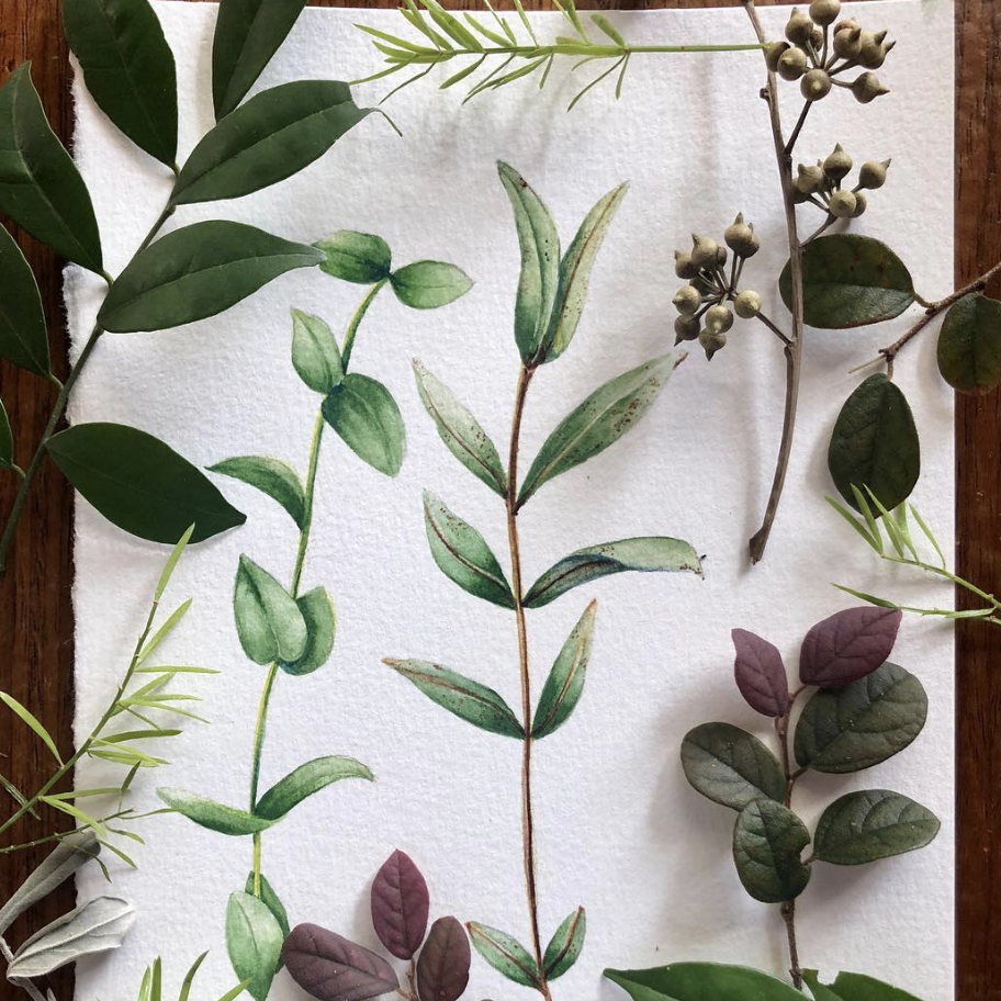Botanical Illustration and Watercolour / 23 Sep Sun 1200-1400 hrs