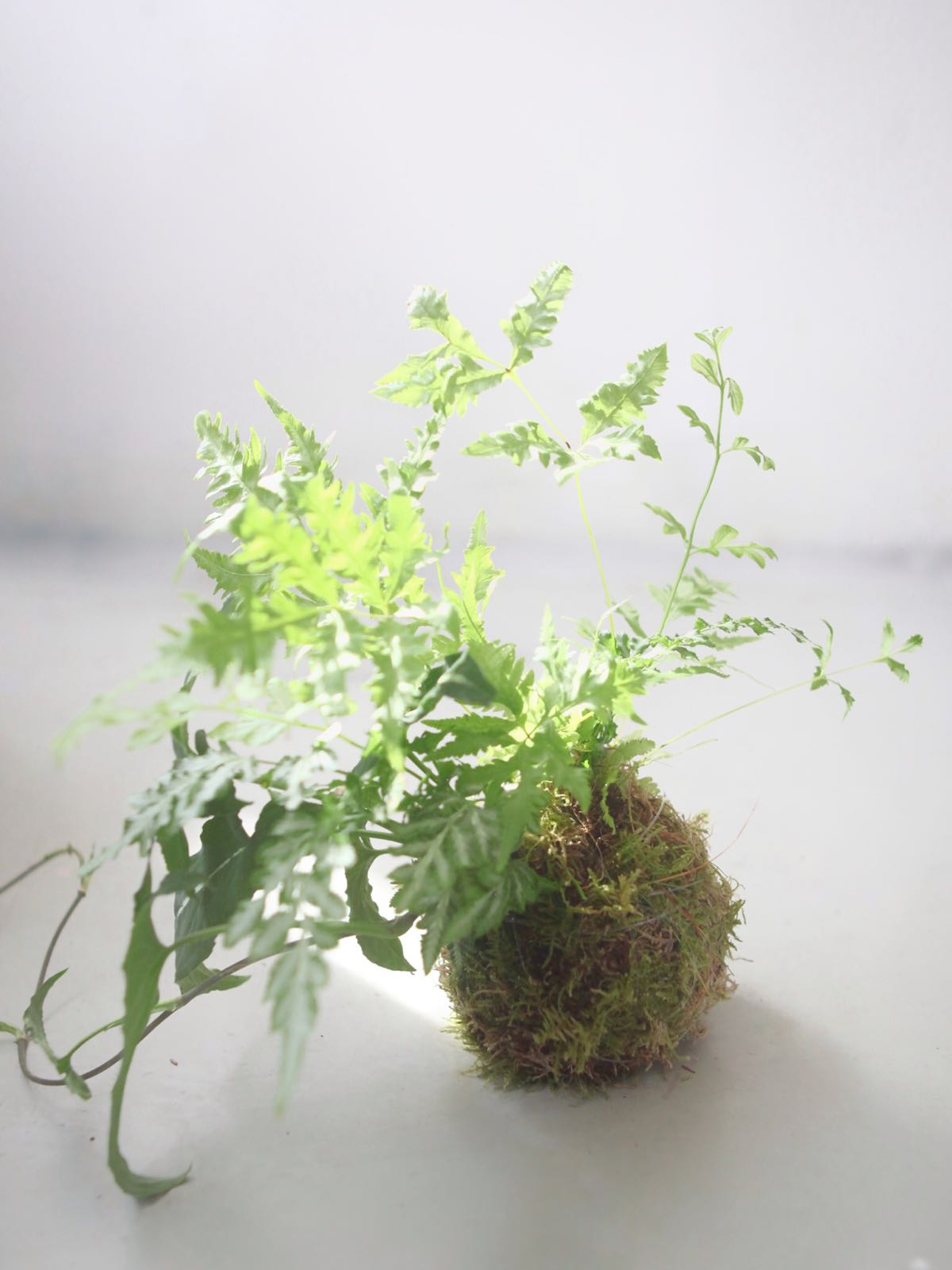 Kokedama Workshop / 21 Apr Sat 1300-1430 hrs