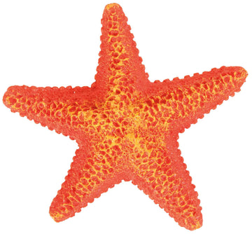 Assortment Starfish