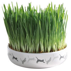 Ceramic Bowl for Cat Grass
