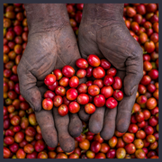 Uganda - Rwenzori Natural - Moon Roast Coffee