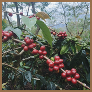 Sumatra - Bener Meriah - Moon Roast Coffee
