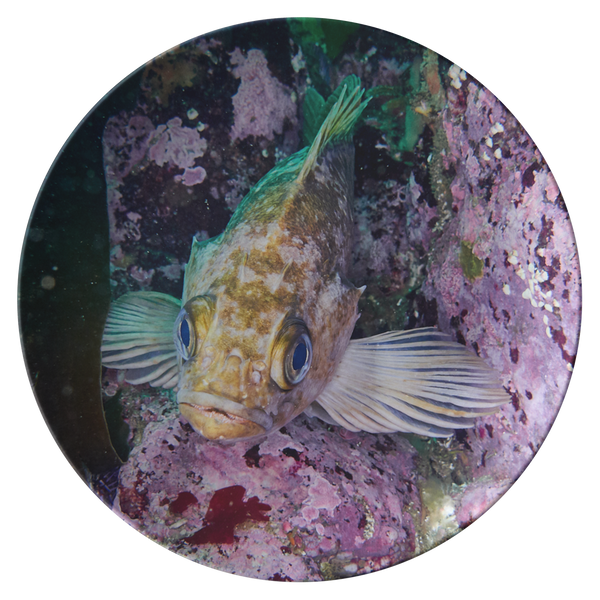 Fish Face 2 Thermosaf© Dinner Plate - Kelp Rockfish - Boat/Picnic Ware - Plastic Dish - Underwater Photo - Ocean/Sealife
