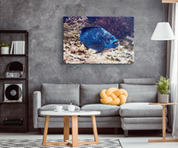 Midnight Blue Parrotfish and Remora Eel Underwater Photo Canvas Wrap Art Print