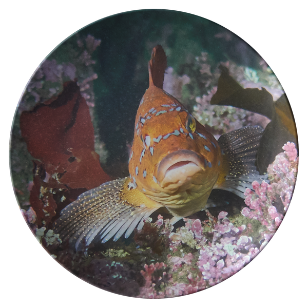 Fish Face 1 Thermosaf© Dinner Plate - Kelp Greenling - Boat/Picnic Ware - Plastic Dish - Underwater Photo - Ocean/Sealife