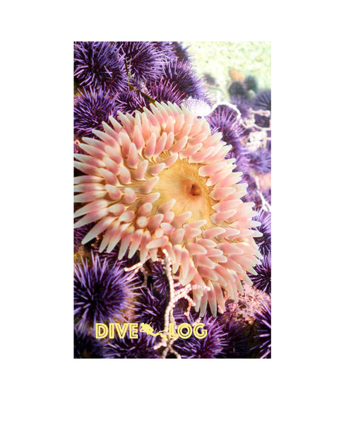 Stubby Rose Anemone & Purple Sea Urchin Scuba Dive Log Book - Diving Journal/Logbook