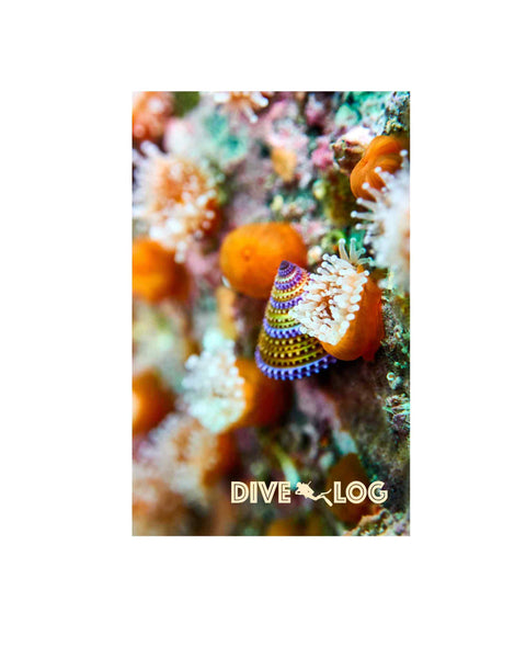 Blue Ring Top Snail & Nudibranch Scuba Dive Log Book - Diving Journal/Logbook