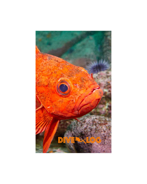 Vermilion Rockfish Scuba Dive Log Book - Diving Journal/Logbook